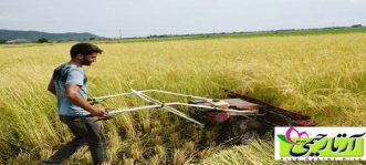 برنج ایرانی و برنج نیمدانه