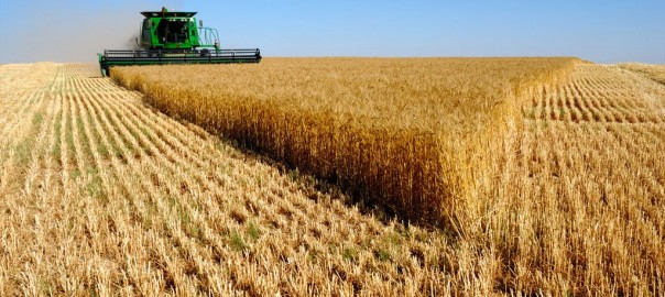 استفاده مفيد از ضايعات برنج