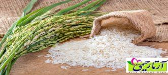 برنج ايرانی در طب سنتی