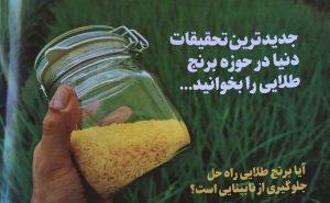 برنج طلایی