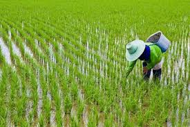 ترکيب وخواص برنج