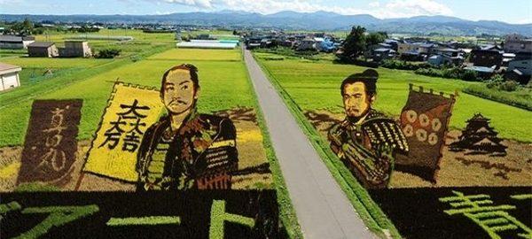 مزرعههای برنج