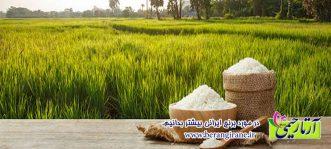 در مورد برنج ایرانی بیشتر بدانیم