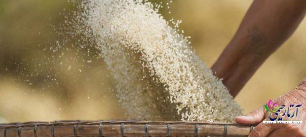 برنج نیم دانه چیست؟