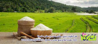 قد کشیدن برنج مهمتر است یا عطر و طعم