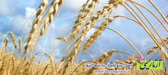 ارسال برنج شمال به رباط کریم