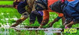 برنج و برنج کاری در زبان مردم گيلان و مازندران و چند ناحيه ديگر