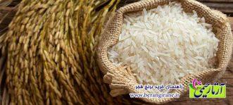 راهنمای خرید برنج فجر