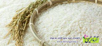 راهنمای خرید برنج طارم دم سیاه