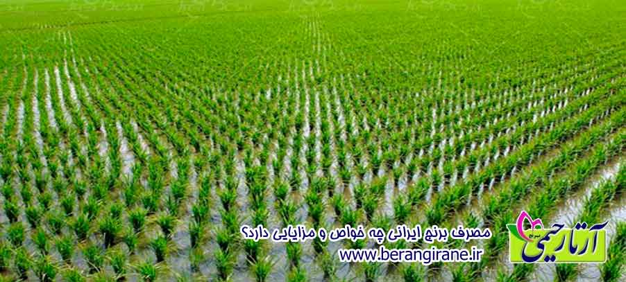 مصرف برنج ایرانی چه خواص و مزایایی دارد ؟