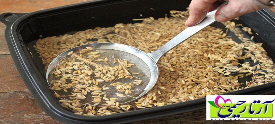 بهترین بذر برای کشت برنج ایرانی کدام است؟