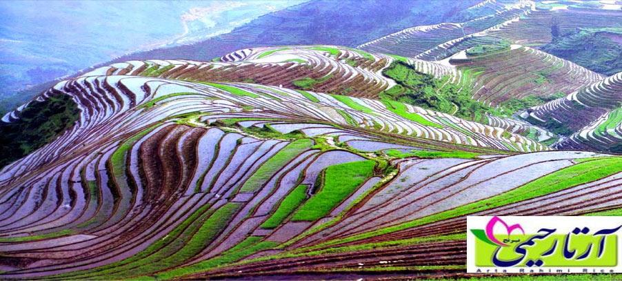 21 نکته عجیب درباره برنج